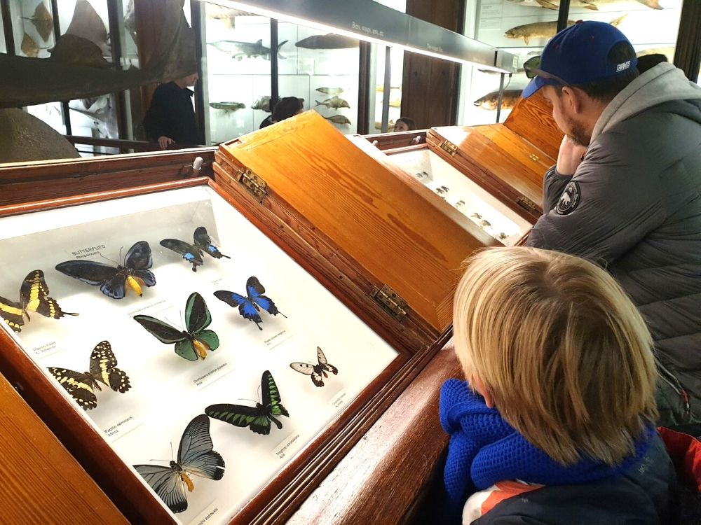 Beautiful butterflies at the Tring Museum