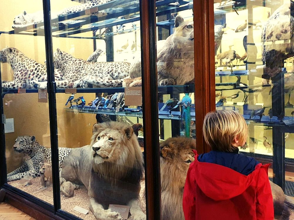 Big Cats at the Tring Natural History Museum