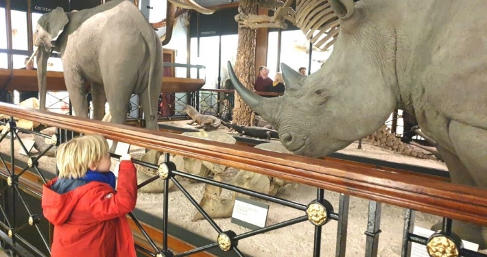 Elephant and Rhino at the Tring Natural History Museum