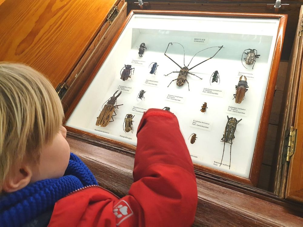 Insects on display at the Natural History Museum Tring