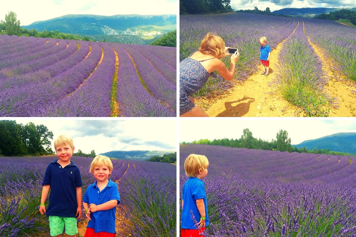 Lavender fields in Provence_