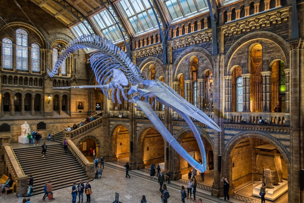 The Blue Whale at the Natural History Museum London best of the free things to do in London