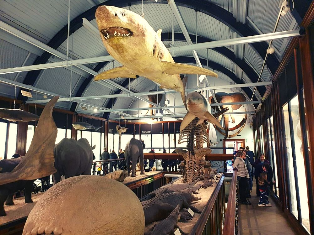 Sharks and large mammals in Gallery 3 at the Tring Museum