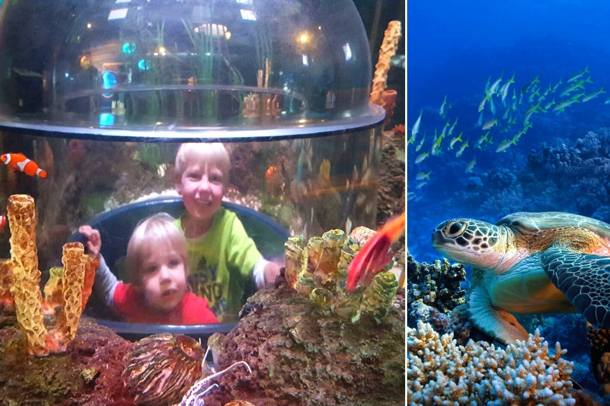 The Sea Life Centre in Hunstanton