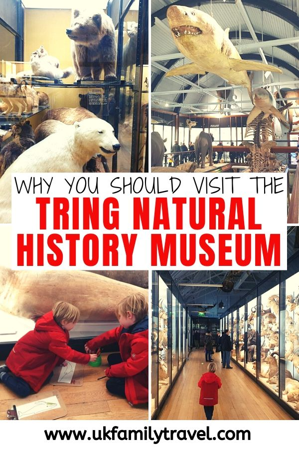 Why you should visit the Tring Natural History Museum