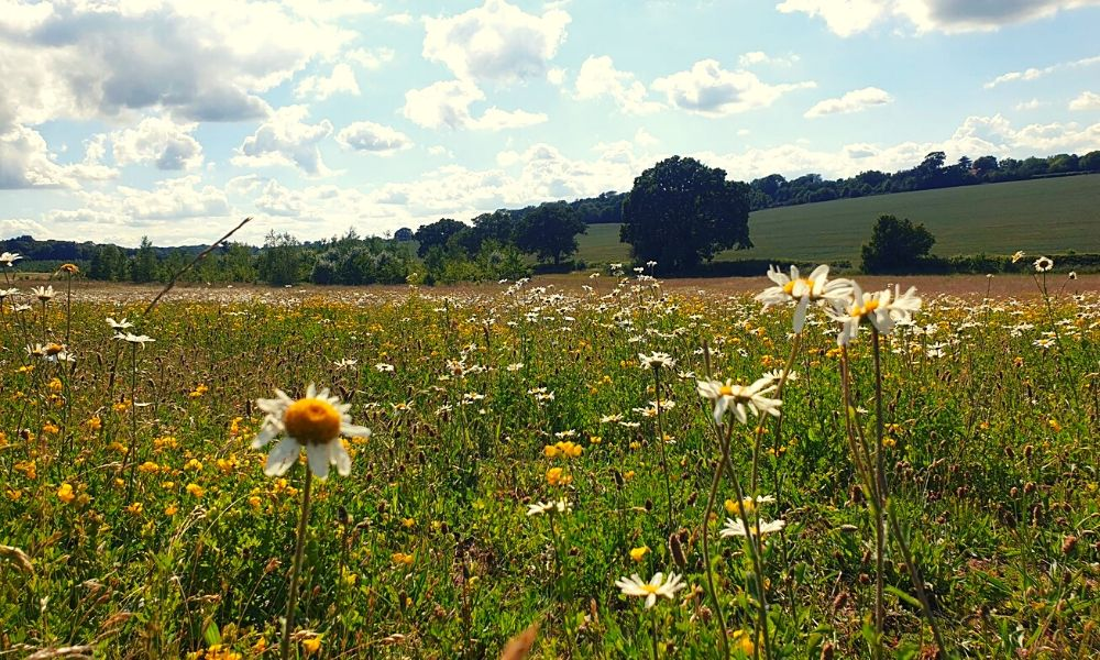 Meadow area at Heartwood Forest