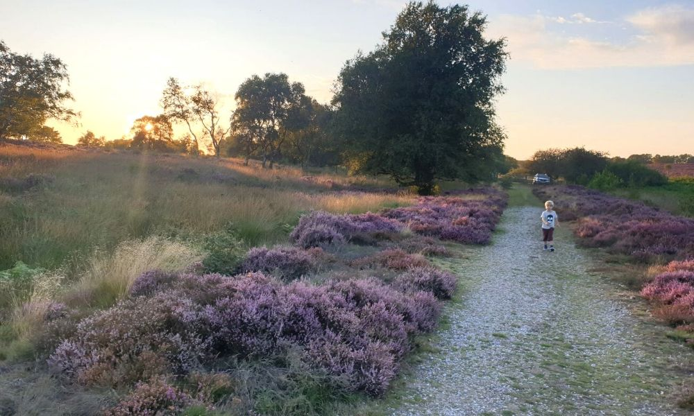 Sunset at Dunwich Heath in Suffolk