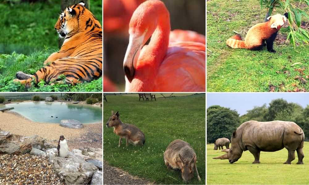 The animals of Whipsnade Zoo