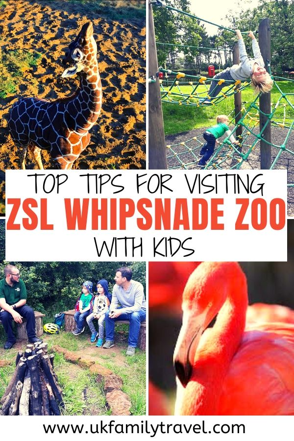 Top tips for visiting Whipsnade Zoo with kids
